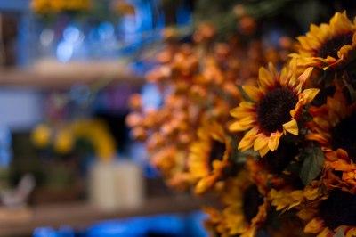 sunflowers in mass